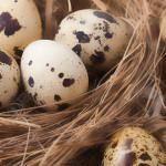 با خواص تخم بلدرچین بیشتر آشنا شویم