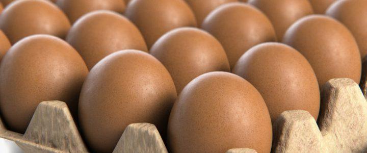 ۱/۱میلیون تن تولید تخم مرغ