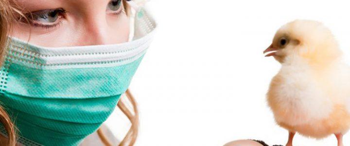 علایم آشکار آنفلوانزای پرندگان و درمان آن